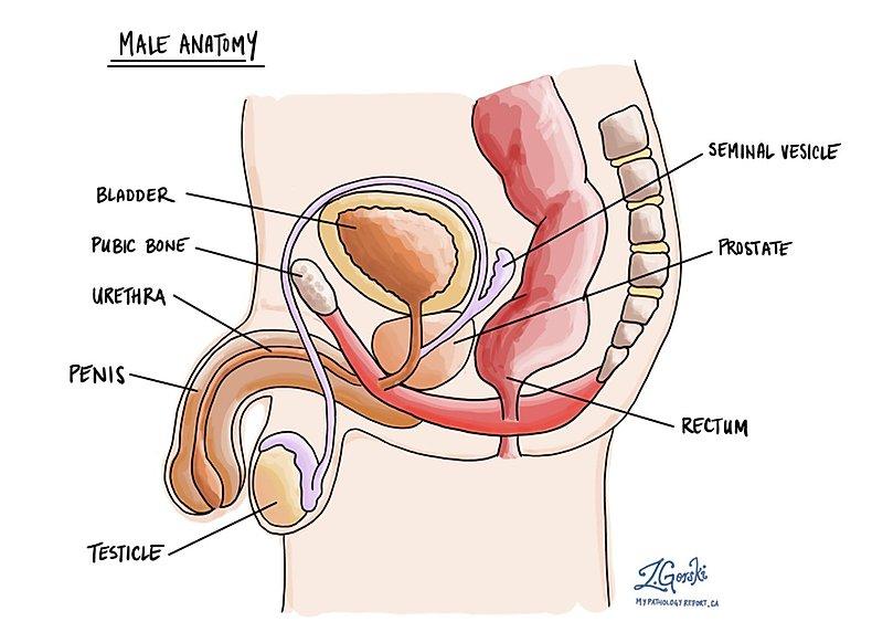 Prostatitis és uretera