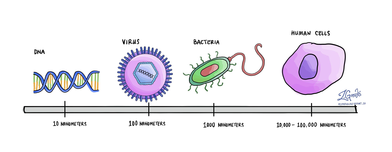 Virus vs bacteria vs human cell