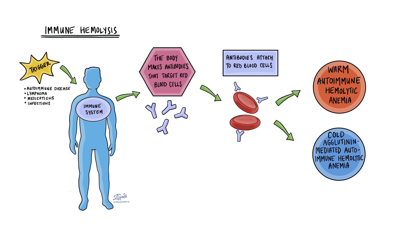 Immune hemolysis