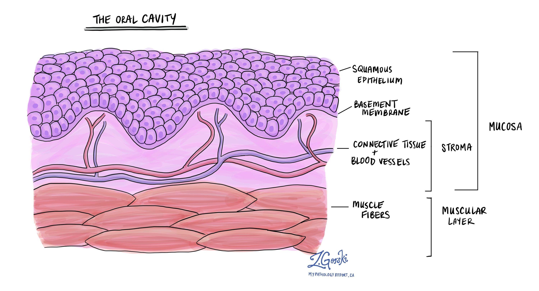 Oral Cavity Normal