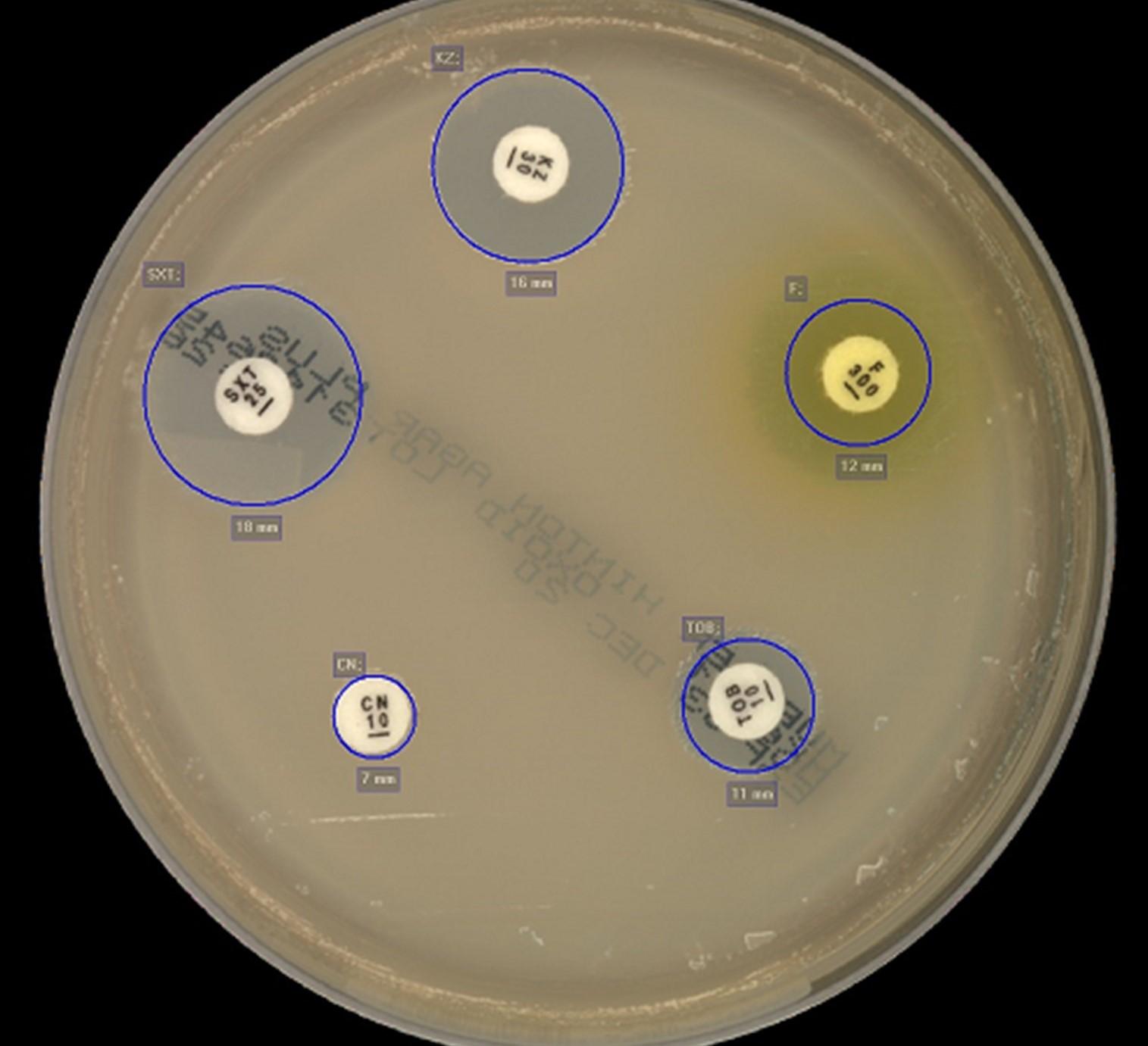 discos de antibióticos